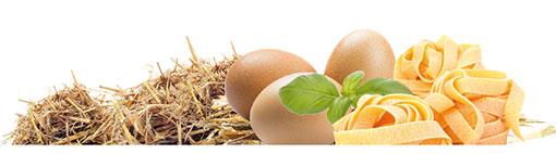 Eier Nudeln Startseite